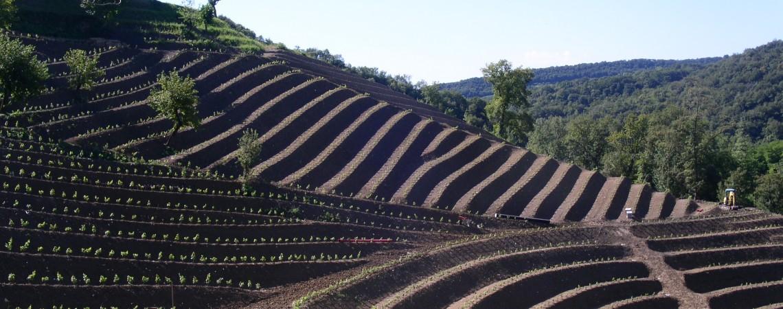 Sistemazione agraria